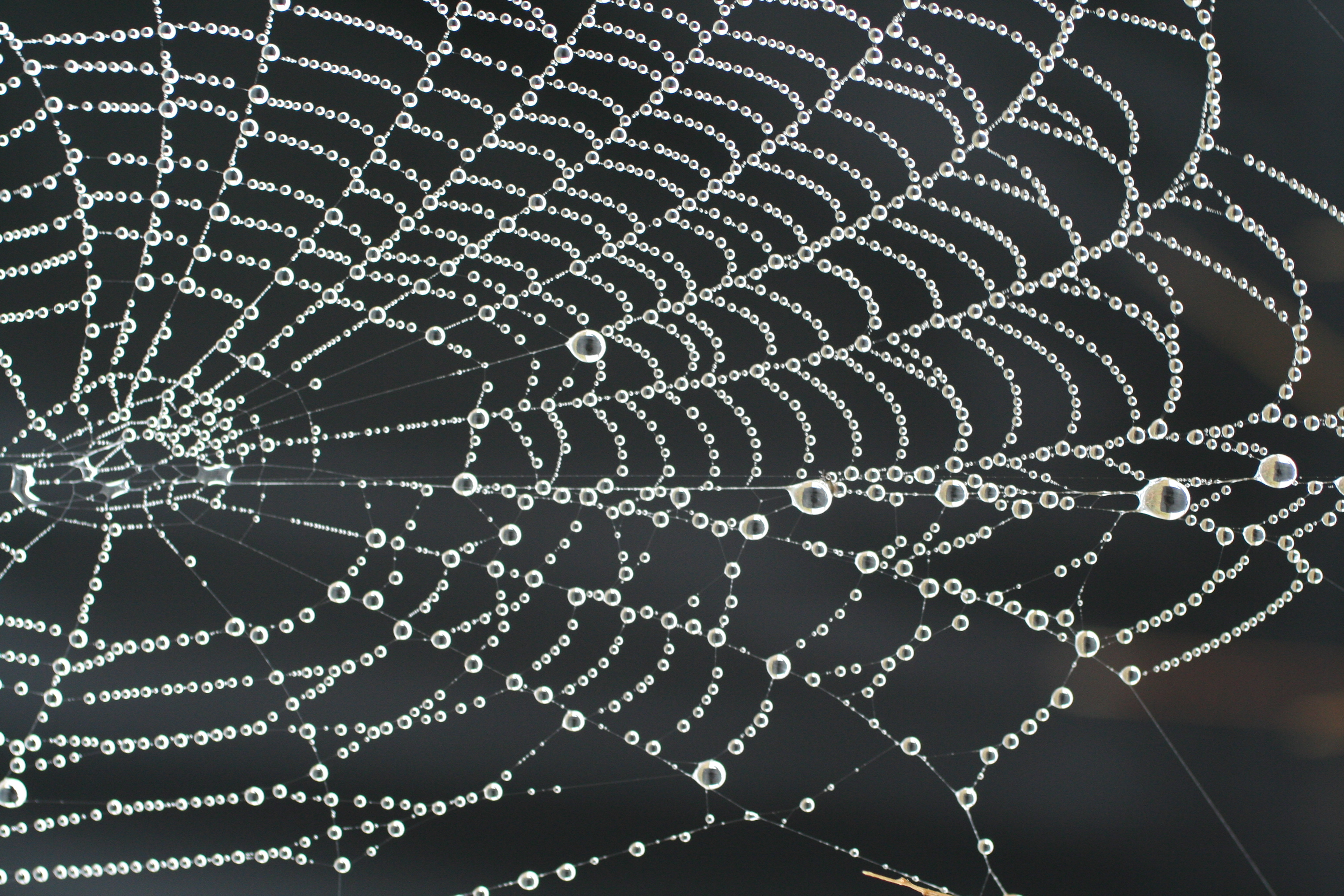 Spider_web_necklace_with_pearls_of_dew